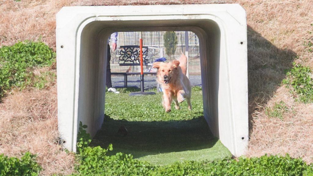 犬がトンネルに入る